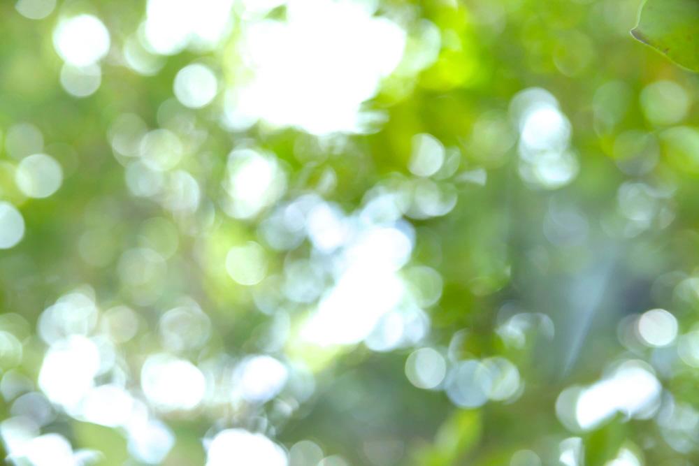 緑(フリー)