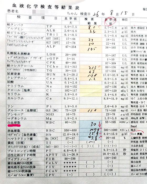 2014/8/15のチョビの血液検査結果