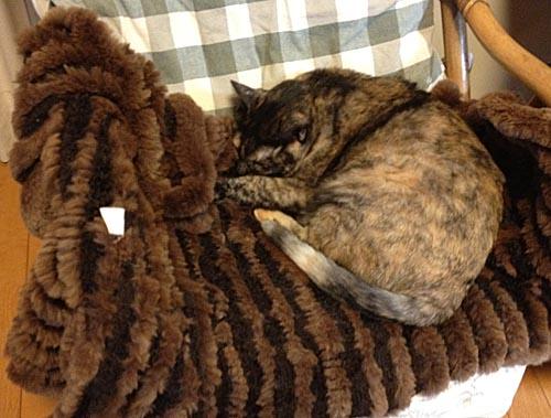 毛皮の上で眠るチョビ