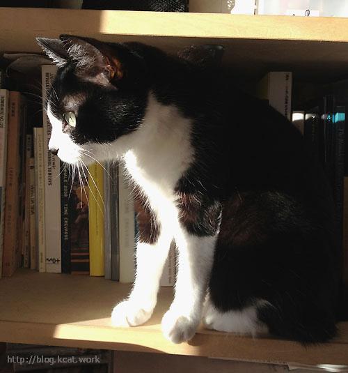 本棚のクロ