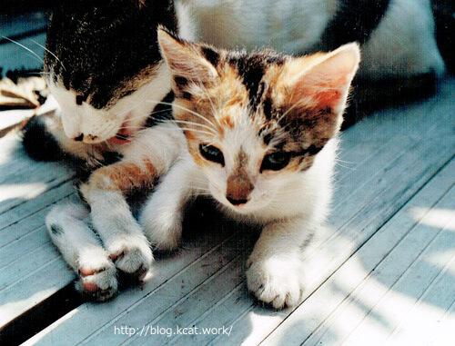 1994年当時の猫たち