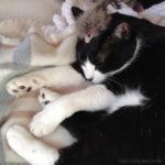 【猫のお腹改善にもミヤリサン?】