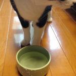 【水素水トラストウォーターの味見~猫と人で】