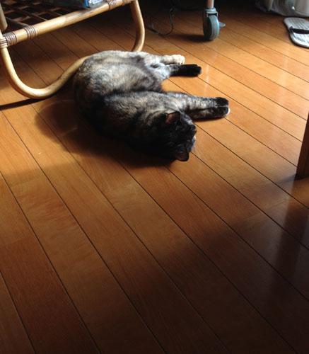 床暖房で眠るチョビ
