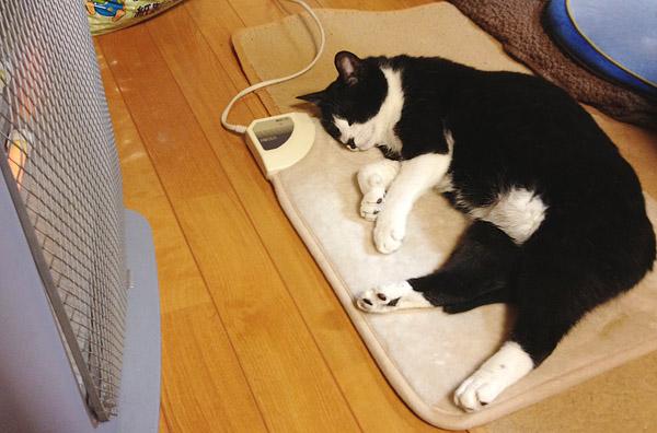 ホットカーペットで眠るクロ