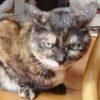 【猫の来客対応・三者三様~チョビは意外と社交的?】