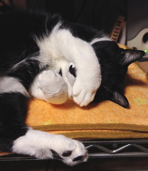 パソコンの前で眠るクロ