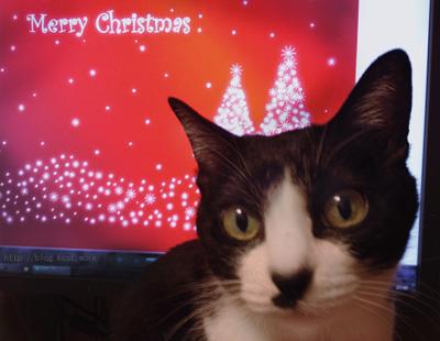 2015年クリスマスイブのクロ