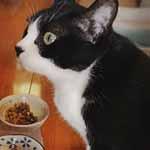 【腎不全猫・クロの食事記録:2016年2月第5週~3月第2週】