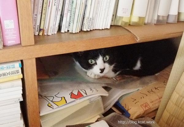 本棚の中のクロ