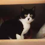 【猫のかかりつけ病院選びで考慮したい10のポイント】