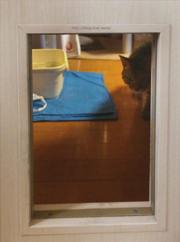 これまでの猫ドアをはずす
