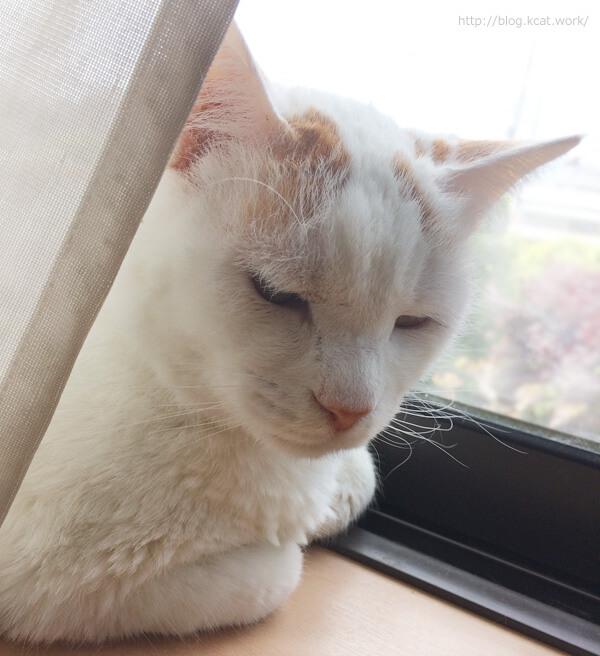 窓際でいじけるシロ