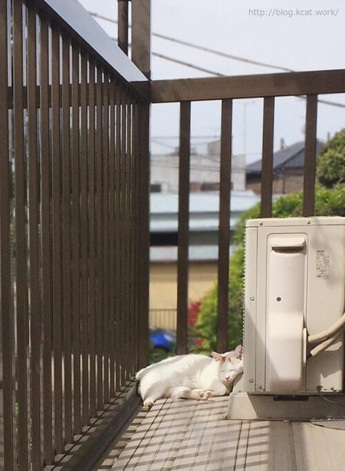 まどろみのシロ 2017/5/4