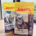 【4匹で試食・ジョセラのカリスモ(腎臓疾患用)+クリネッセ(成猫用)】