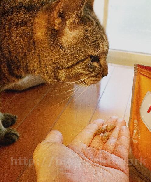 アニモンダ 猫用 腎臓ケア ドライ とフク