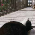 【使ってよかった、本当におすすめできる猫用便利グッズ6選】
