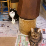 【猫たちの近況+救急電話相談#7119に電話した話】