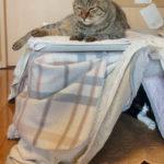 【病気猫がいるときの一泊対策(+ミニ旅行記)】
