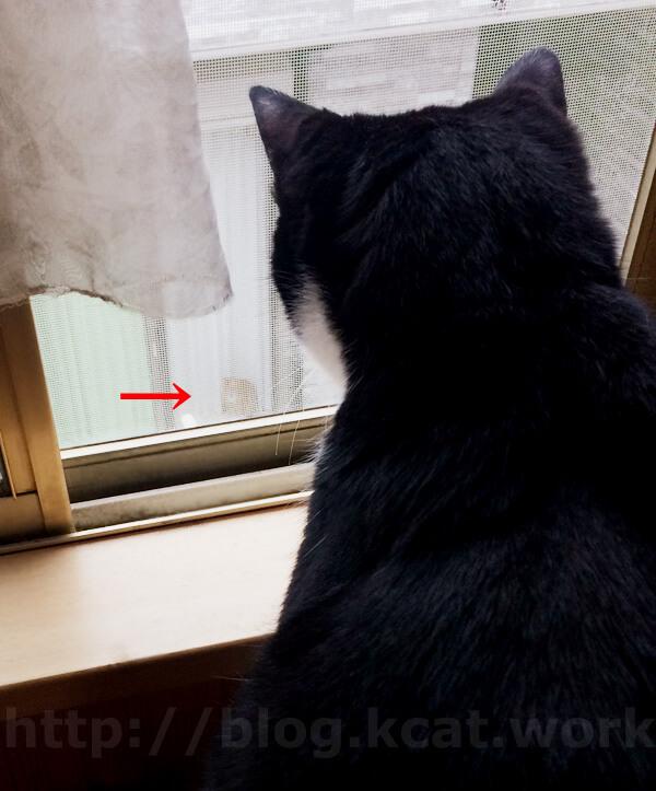 お隣の猫とクロ 2018/5/31