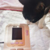 【注文したERDE(エルデ)のペット用血圧計が届きました】