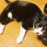 【ブラックフライデーとサイバーマンデーで年末年始の猫用品を】