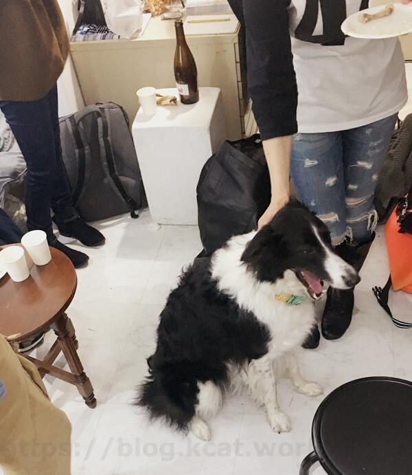 パーティと犬 2018/21/24