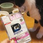 【3匹で試食・jpスタイル キドニーキープ ウェット(腎臓用療法食)】