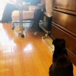 【猫と姪っ子たち~それぞれの成長と移り変わり】