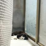 【近況~クロの血液検査と、猫友さんの後日談】