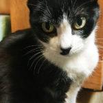 【猫と私のかんたんな近況。ちょっとつかれてます。】