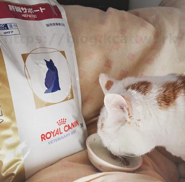 シロとロイヤルカナン 肝臓サポート 猫用ドライ