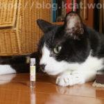 【猫とフレグランス~猫に影響を与えず香りを楽しむことはできるのか?】