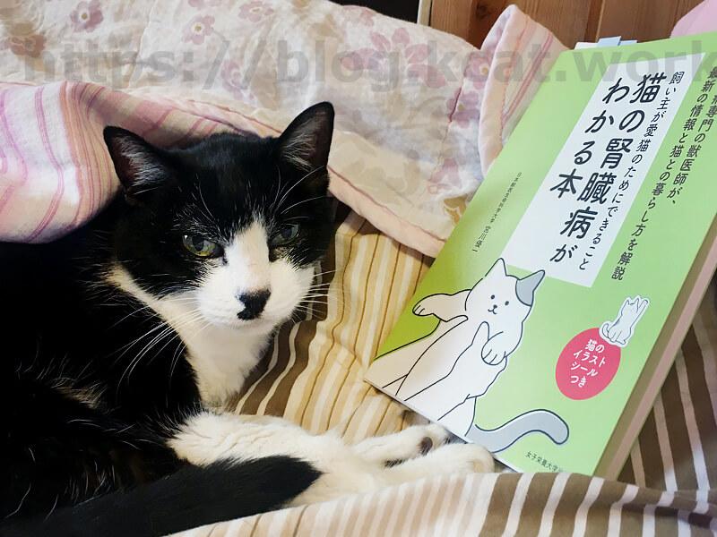 クロと「猫の腎臓病がわかる本」